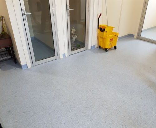 vet-kennel-room